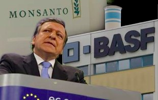 Bruxelles autorise l'entrée de trois maïs OGM 2009_eu-310px